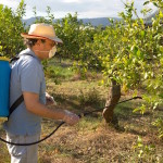 Agricultural worker spraying pesticide on fruit trees